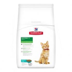 Kitten Au Thon Healthy Development