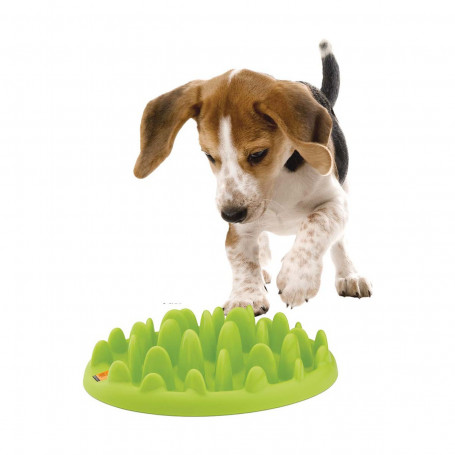 Gamelle Green Slow Dog pour chien