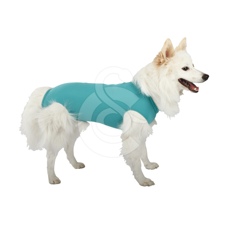Gilet DogBody VetMedCare pour chien