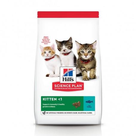 Feline Kitten Thon