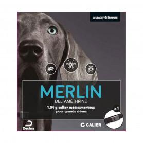 Merlin Collier Grand Chien