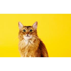 Conseil anti-parasitaire chez le Chat - Elanco